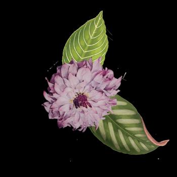 flor de jane apothecary